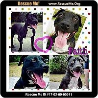 Adopt A Pet :: Faith - hollywood, FL