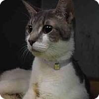 Adopt A Pet :: Juliet - Hudson, NY