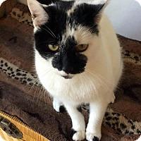Adopt A Pet :: Marlow - Alameda, CA