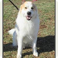 Adopt A Pet :: BOONE - LaGrange, KY