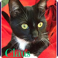 Adopt A Pet :: Claus - Gonic, NH