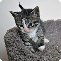 Adopt A Pet :: Atwell - Mississauga, Ontario, ON