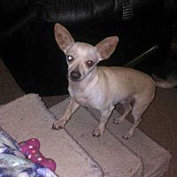 Adopt A Pet :: Chris - Livermore, CA