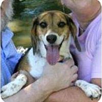 Adopt A Pet :: Ginger - Grand Rapids, MI