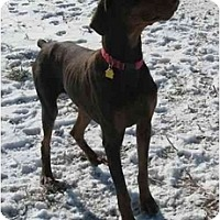 Adopt A Pet :: Murray--adopted!! - New Richmond, OH