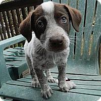 Adopt A Pet :: Parson - Staunton, VA