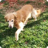 Adopt A Pet :: Iris - Denver, CO