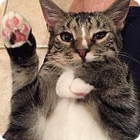 Adopt A Pet :: Shelby - East Hanover, NJ