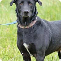 Adopt A Pet :: Barkley - Marlinton, WV
