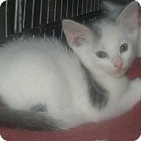 Adopt A Pet :: TANEY - Acme, PA