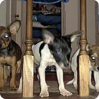 Adopt A Pet :: Coming Soon... - Virginia Beach, VA