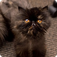 Adopt A Pet :: Eastlaw - Fountain Hills, AZ