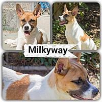 Adopt A Pet :: MilkyWay - Staley, NC