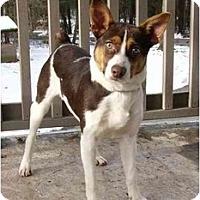Adopt A Pet :: Beckett - Mocksville, NC