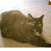 Adopt A Pet :: Squirt - Quincy, MA