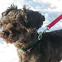 Adopt A Pet :: Henri - Rigaud, QC