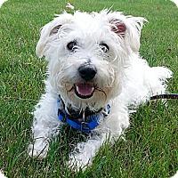Adopt A Pet :: SCRUFFY - GARRETT, IN