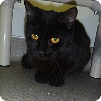 Adopt A Pet :: Max - Hamburg, NY
