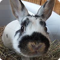 Adopt A Pet :: SweetPea - Foster, RI