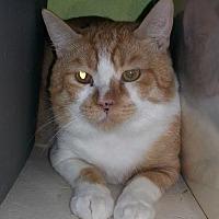 Adopt A Pet :: Gus - Tucson, AZ
