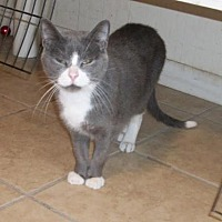 Adopt A Pet :: O'Malley - Lacon, IL