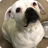 Adopt A Pet :: Tinker - Beverly Hills, CA