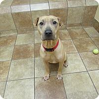 Adopt A Pet :: Biscuits - Appleton, WI