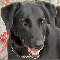 Adopt A Pet :: Faith - Crossville, TN
