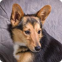 Adopt A Pet :: PLUTO - Anna, IL