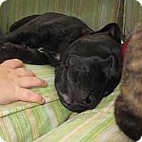 Adopt A Pet :: Penny - Dallas, PA