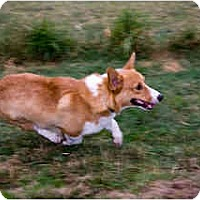 Adopt A Pet :: Journey - Inola, OK