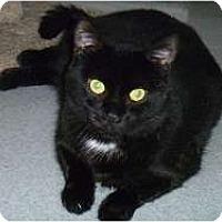 Adopt A Pet :: Shilo - Hamburg, NY