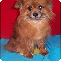 Adopt A Pet :: LEXI - Rossford, OH