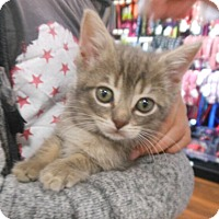 Adopt A Pet :: Ron - Reston, VA