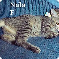 Adopt A Pet :: Nala - Bentonville, AR
