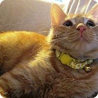 Adopt A Pet :: Sparky - Lebanon, PA