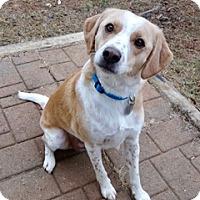 Adopt A Pet :: Jack Frost - Homewood, AL