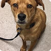 Adopt A Pet :: Mason - Jacksonville, NC