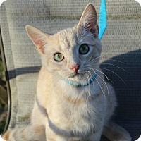 Adopt A Pet :: Mufasa - Ocean Springs, MS