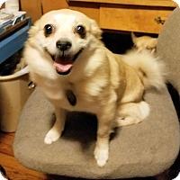 Adopt A Pet :: Brittany - Rock Hill, SC