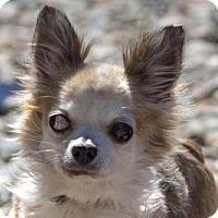 Adopt A Pet :: Nathan - Colorado Springs, CO