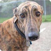 Adopt A Pet :: Roy (Royal Measure) - Chagrin Falls, OH