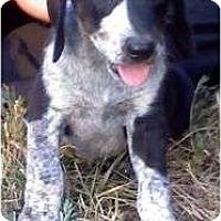 Adopt A Pet :: Porshe - Plainfield, CT