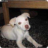 Adopt A Pet :: Poky - Newcastle, OK
