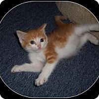 Adopt A Pet :: Aron - South Plainfield, NJ