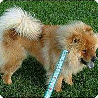 Adopt A Pet :: Leo - Columbus, OH