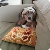 Adopt A Pet :: Bowman - Gilford, NH