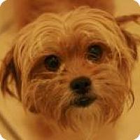 Adopt A Pet :: Chewy - Canoga Park, CA