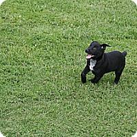Adopt A Pet :: Alex - Morgantown, WV