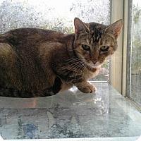 Adopt A Pet :: Abby - San Ramon, CA